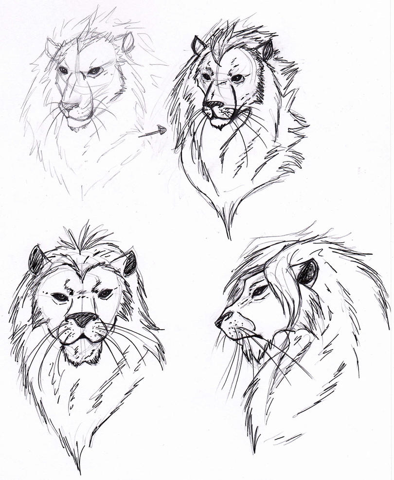 Lions head sketch by C...