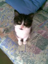 I Was Cute Kitten B by Geneforge