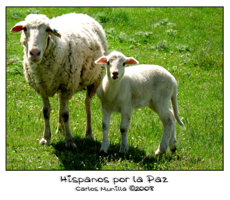 Hispanos por la Paz by cmunilla
