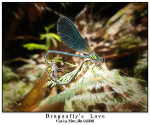 Dragonfly's Love by cmunilla