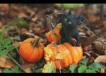 Before Samhain by AmeliaMadHatter