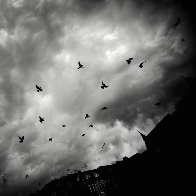 Wings by MichaelMagin