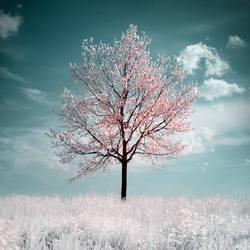 The Cherry Tree by MichaelMagin
