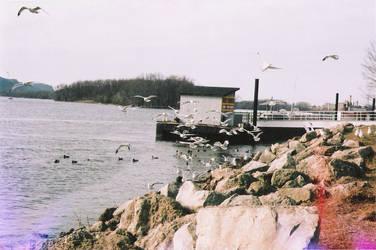 Seagulls in the fall by jenniferbryarrr