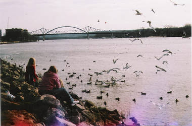 Mississippi seagulls by jenniferbryarrr