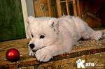 White bear Umka