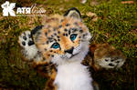 Jaguar baby