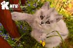 Grey cat Gregory