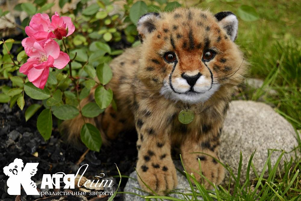 a small Cheetah