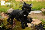 Black cat Rick