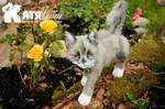 Gray cat Jack