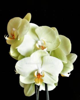 Motherchids