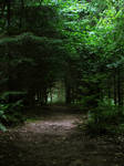forest path 07