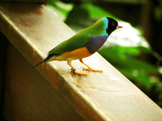 bird 05 by Pagan-Stock