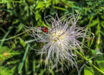 bug 01 by Pagan-Stock