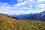 meadow 18