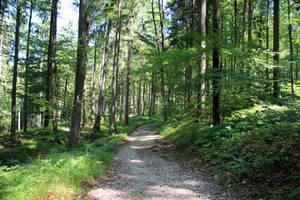 path 22 by Pagan-Stock
