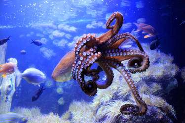Octopus 02 by Pagan-Stock