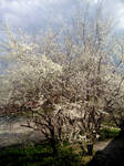 Softness of spring