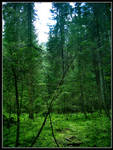 Alone in the Forest 2