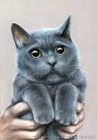 Grey cat by Akadio
