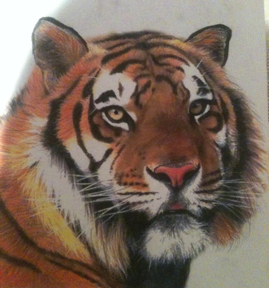 Cute Tiger Drawing Tumblr