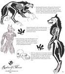 Lycan Anatomy01