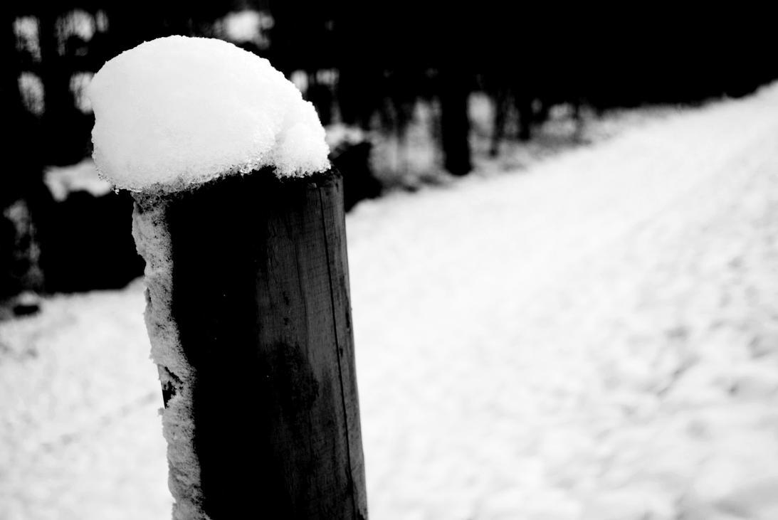 Winter by pdentsch