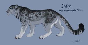 Indigo ref