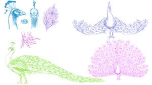 Peacock Sketches~Anatomy Study (September)