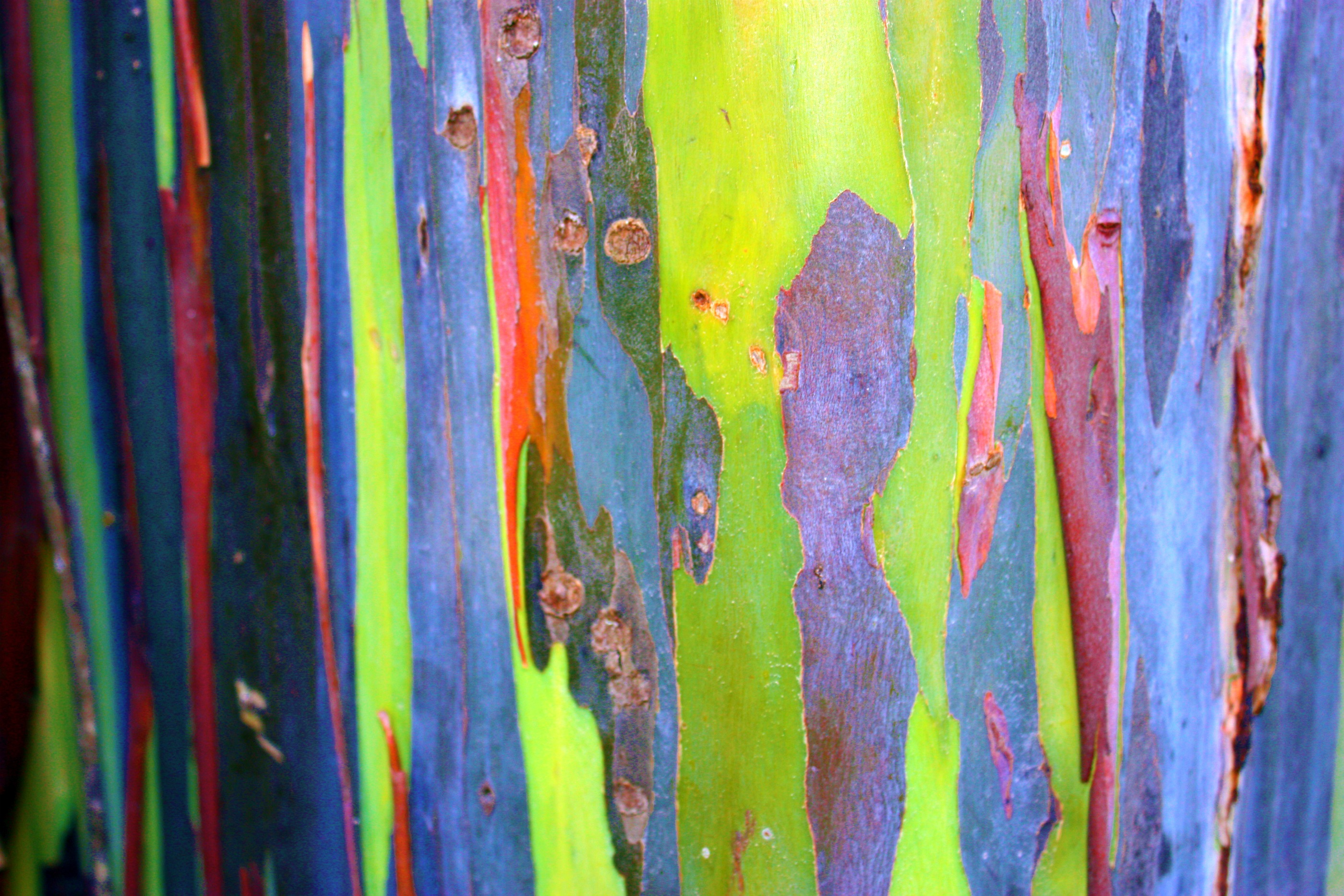 Eucalyptus Bark by AngelAK47 on DeviantArt