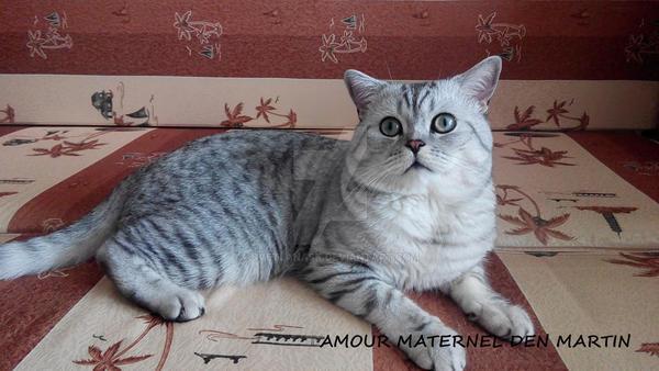 My amazing cat Martin by SvetlanaSK
