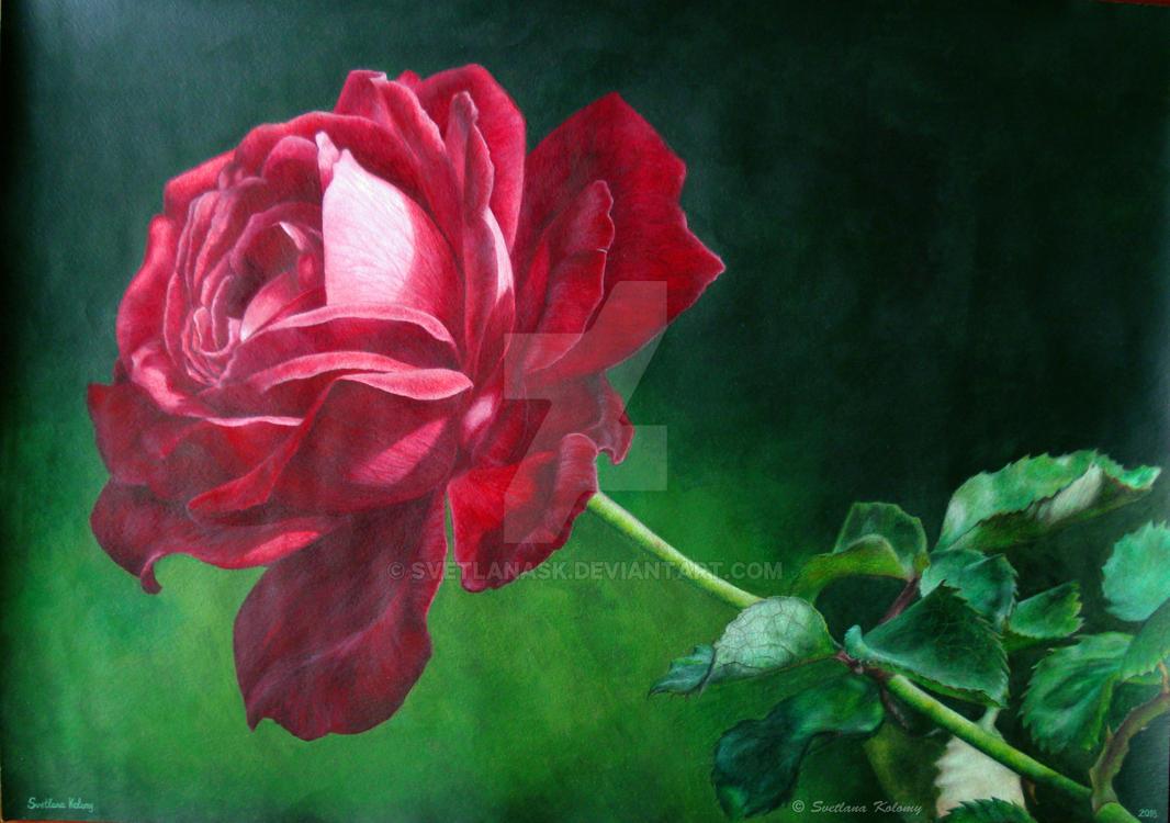 Rose by SvetlanaSK