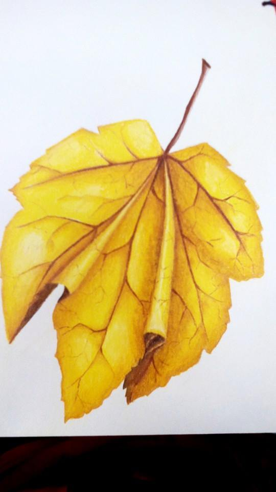 Leaf Study by candy-spazz-tabby
