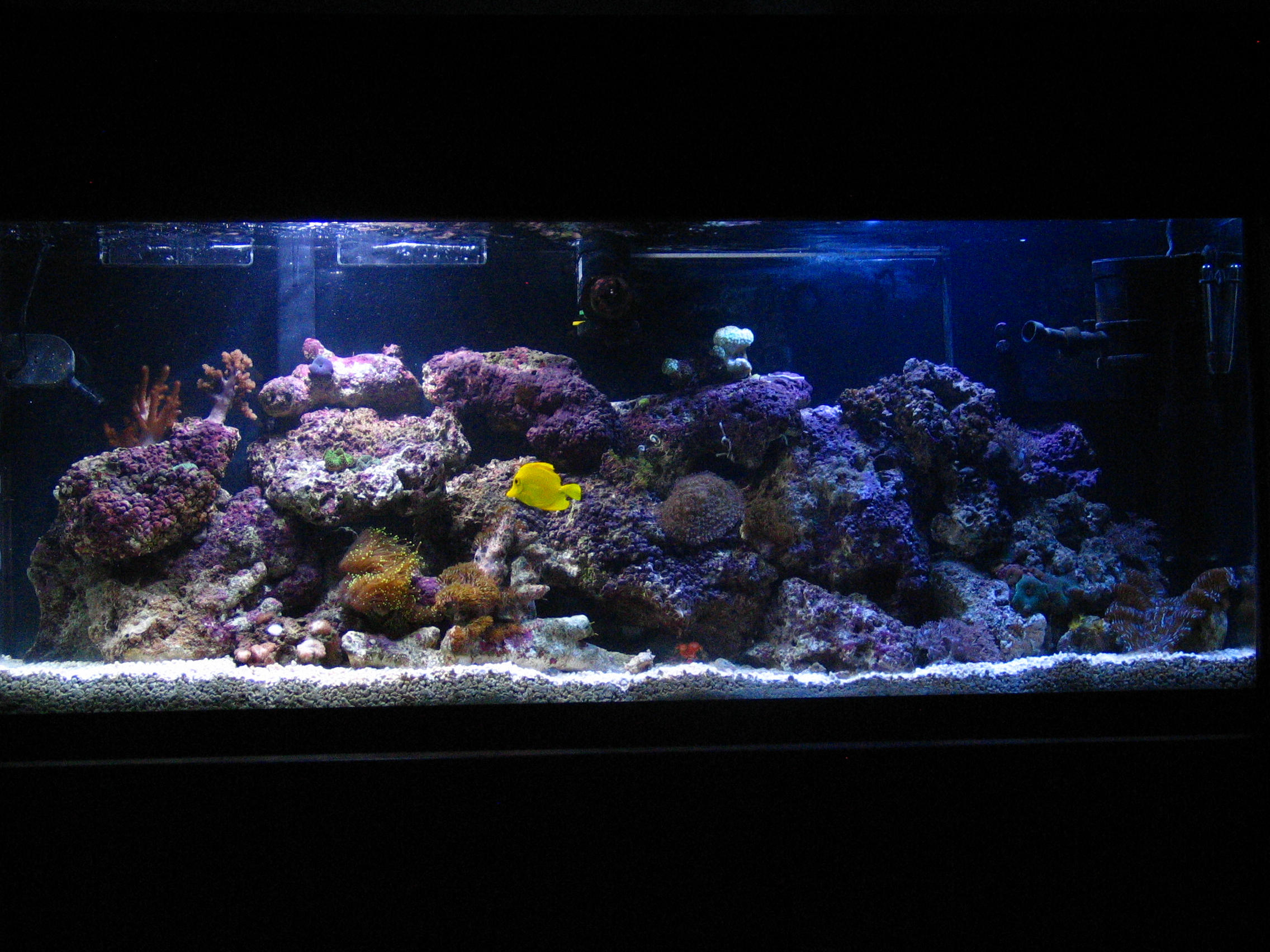 75 gallon aquarium on second floor 75 gallon aquarium on for Floor fish tank