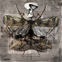Silkworm moth by Thetrueguilty