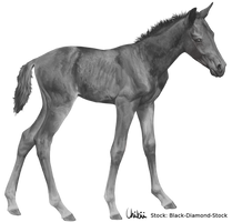 Foal Greyscale - FREE TO USE