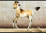 Amber Mirage Reference
