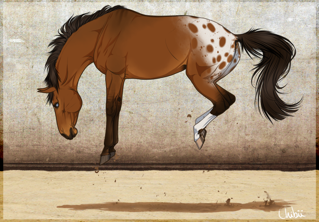 Bucking man: Palace - Warmblood stallion by BH-Stables