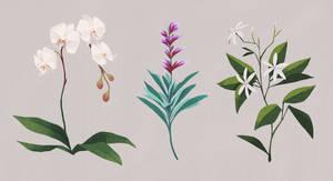 Plant studies by beavotron