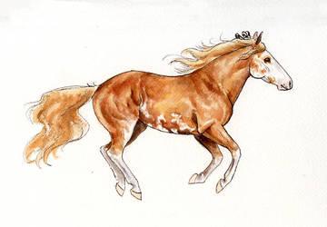 SA   Fox Watercolor by tarried-sea