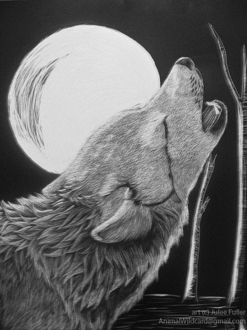crying wolf drawing wwwpixsharkcom images galleries