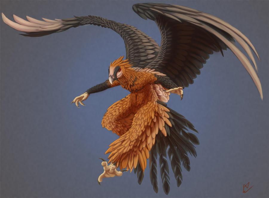 Bearded Vulture by Hexabeast on DeviantArt