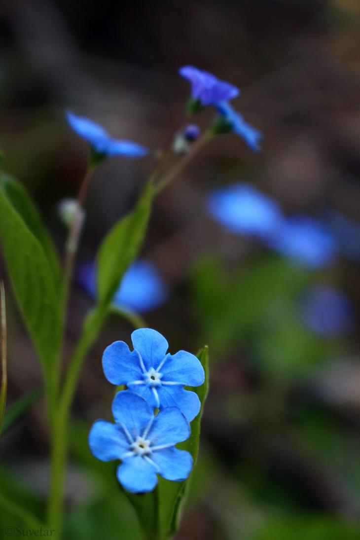 Spring blues by Suvetar