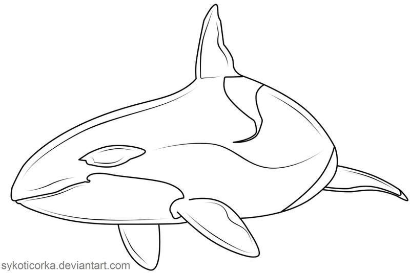 Line Drawing Whale : Turning orca lineart by sykoticorka on deviantart