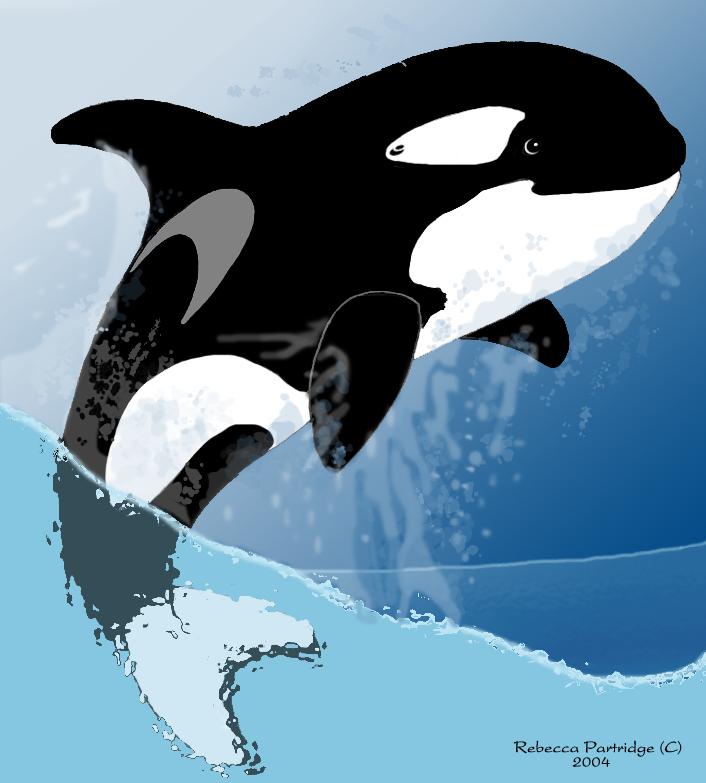 Cartoon Orca Le... Orca Whale Cartoon