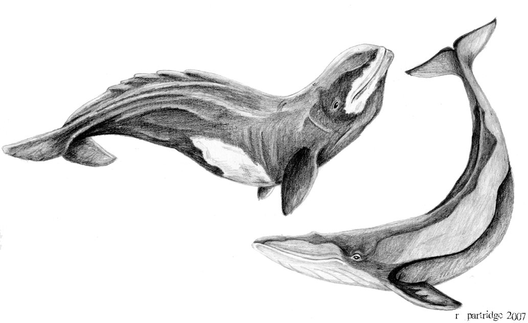 Prehistoric Whales by SyKoticOrKa on DeviantArt