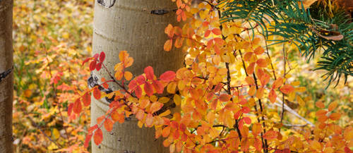 Nero's Leaves by cinquain