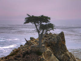 The Lonely Cypress by Amalphi