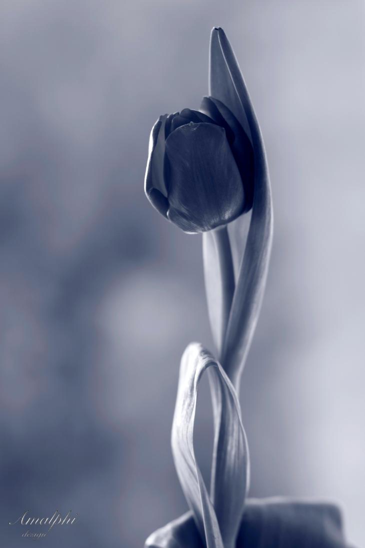 How's my Flower? by Amalphi